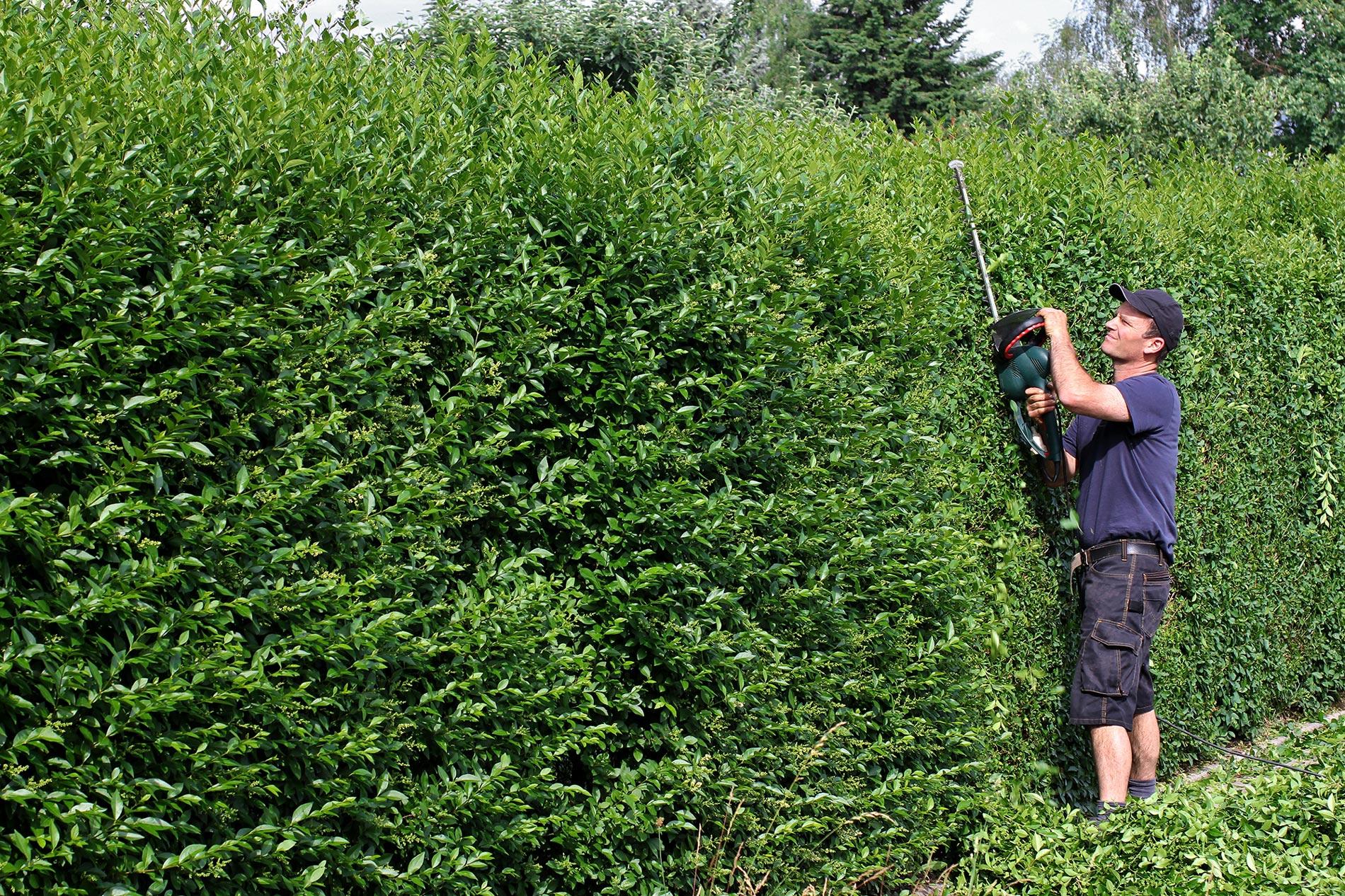 Garten Immo Service Landshut